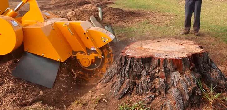 Tree Removal Staten Island Ny