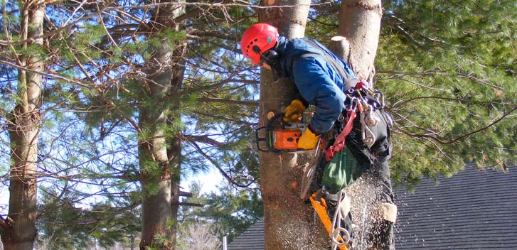 Tree Removal In Staten Island Ny